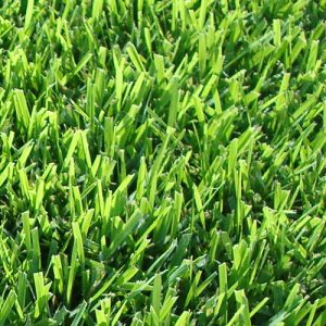 Empire Zoysia – 120 M2 or More